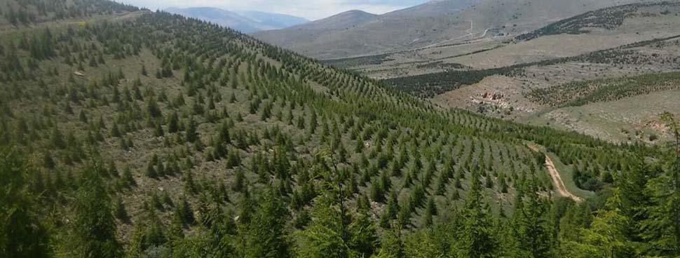 Kırşehir'in orman varlığı arttı